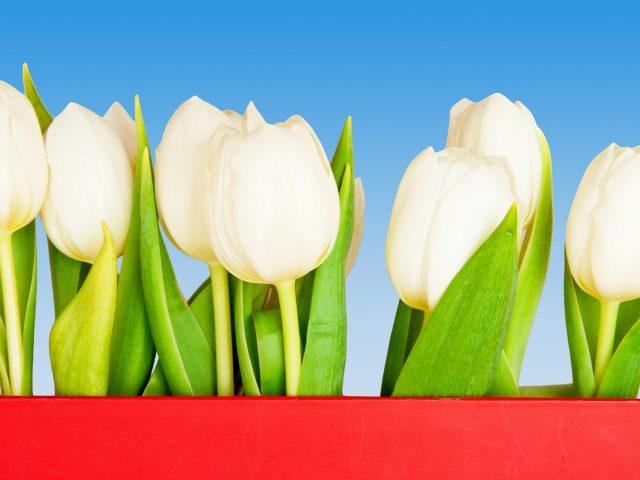 Virágos Háttérképek